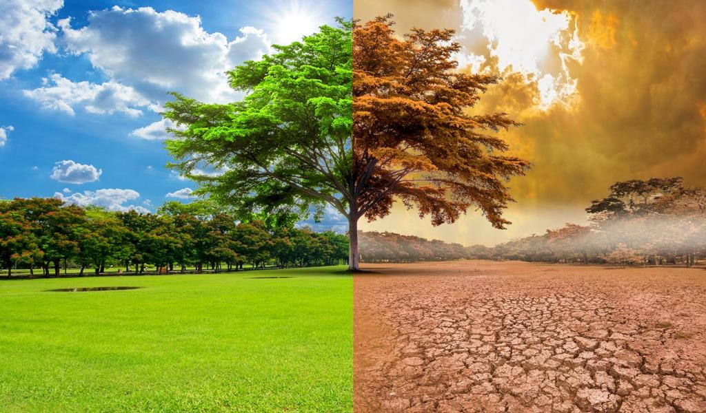 Calentamiento Global: ONU hace llamado a la humanidad a comer mejor para salvar el planeta