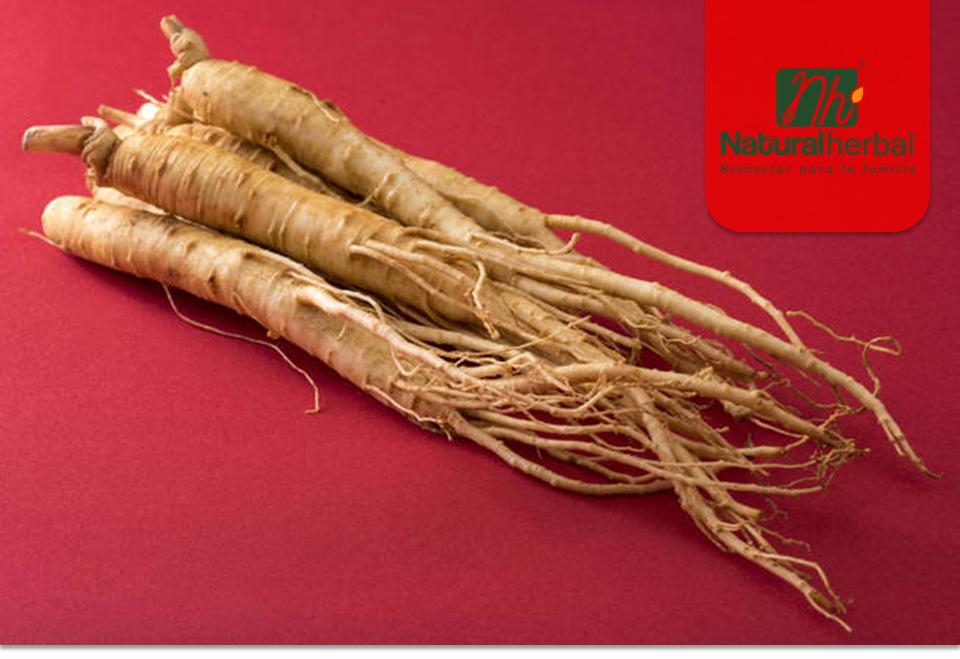 Beneficios y propiedades del Ginseng rojo