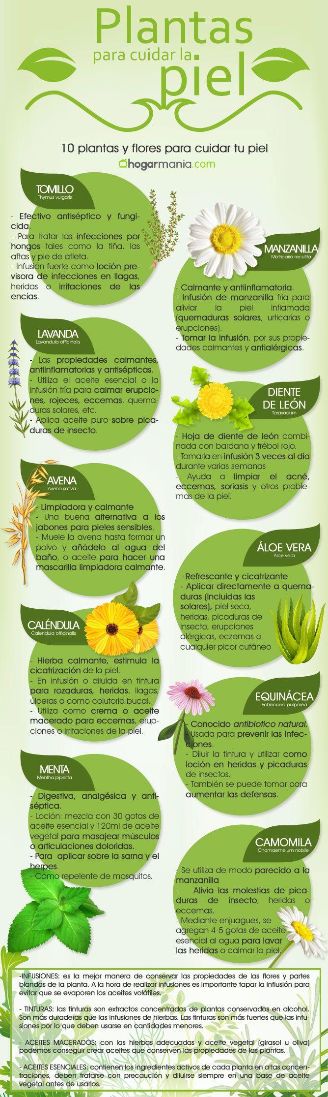 Existe un gran número de plantas y flores que ayudan al cuidado de la piel. En esta infografía os enseñamos las 10 plantas y los remedios naturales asociados a ellas para cuidar la piel, reducir el envejecimiento, ayudar a cicatrizar, curar heridas... entre otras.