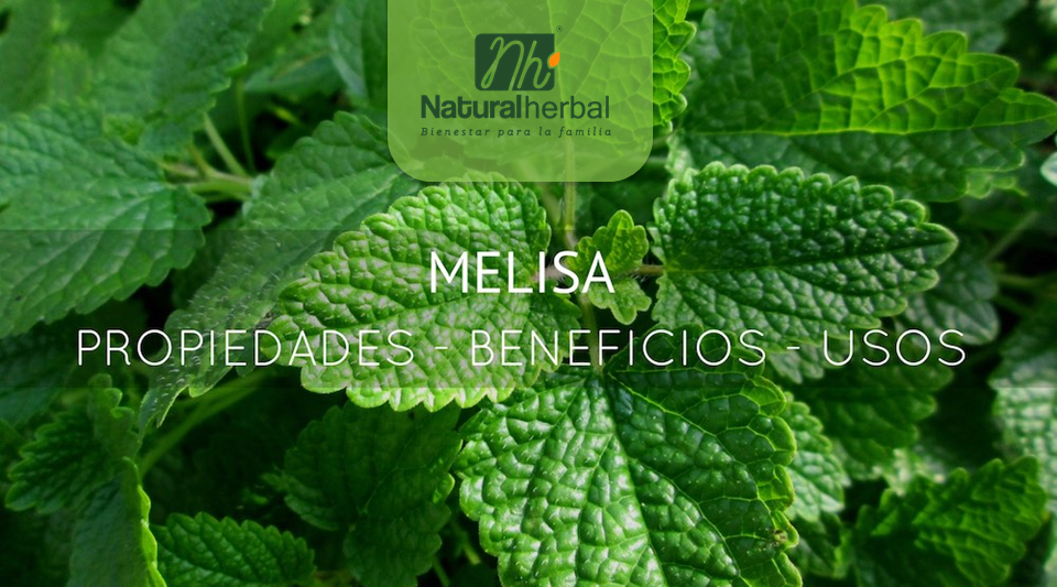 Los grandes beneficios y propiedades medicinales de la Melisa